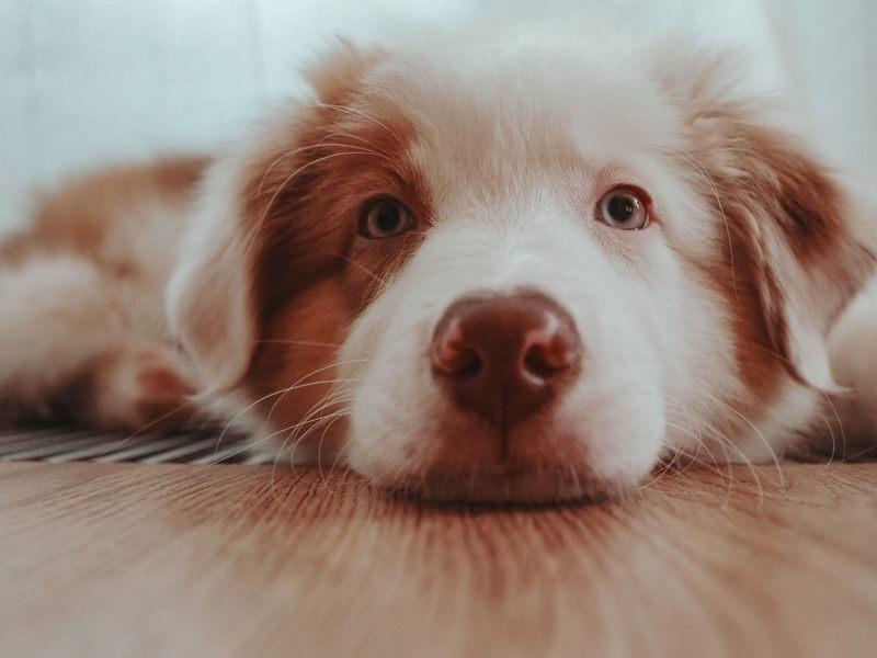 trockenbarf hund